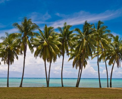 Aitutaki Escape, Cook Islands - Palm Trees